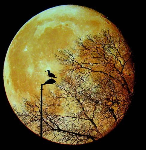 silhouette of bird against moon
